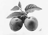 Dietrich-Moravec-Ernte-Pflanzen-Fruechte-Neuzeit-Realismus