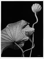 Dietrich-Moravec-Natur-Wasser-Pflanzen-Blumen-Neuzeit-Realismus