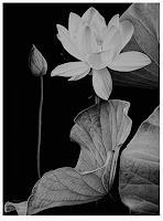 Dietrich-Moravec-Pflanzen-Blumen-Natur-Wasser-Neuzeit-Realismus