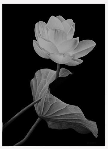 Dietrich Moravec, Vertrauen, Pflanzen: Blumen, Natur: Wasser, Realismus