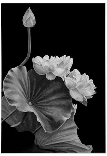 Dietrich Moravec, Neugier, Pflanzen: Blumen, Pflanzen: Blumen, Realismus