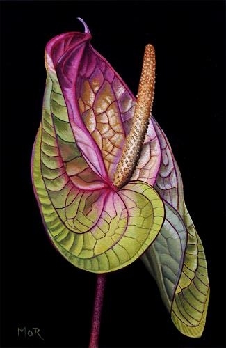 Dietrich Moravec, Anthurium, Pflanzen: Blumen, Dekoratives, Realismus