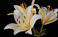 Dietrich-Moravec-Pflanzen-Blumen-Dekoratives-Neuzeit-Realismus