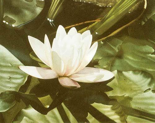 Dietrich Moravec, Belle de jour, Pflanzen: Blumen, Pflanzen: Blumen, Hyperrealismus