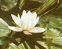 Dietrich-Moravec-Pflanzen-Blumen-Pflanzen-Blumen-Moderne-Fotorealismus-Hyperrealismus