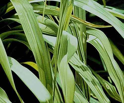 Dietrich Moravec, Grüne Kaskade, Pflanzen: Blumen, Hyperrealismus