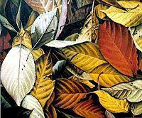 Dietrich-Moravec-Pflanzen-Baeume-Moderne-Fotorealismus-Hyperrealismus