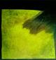 dorota zlatohlávková