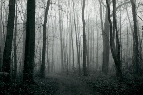Katrin Ginster, nebelwald, 5, Landschaft: Herbst, Natur: Wald, Gegenwartskunst