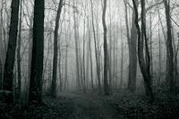 Katrin-Ginster-Landschaft-Herbst-Natur-Wald
