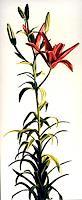 raphael-perez-Pflanzen-Blumen-Stilleben-Neuzeit-Realismus