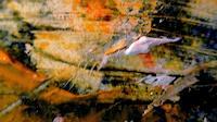 Agnes-Vonhoegen-Diverses-Situationen-Moderne-Abstrakte-Kunst