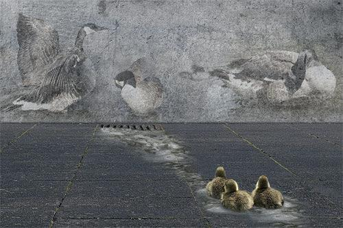 Pascale Turrek, gänse, Tiere: Wasser, Skurril, Surrealismus, Abstrakter Expressionismus