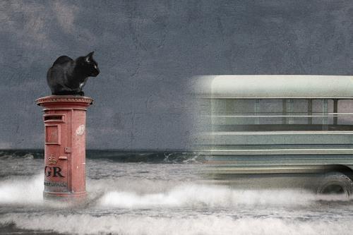 Pascale Turrek, post, Diverse Tiere, Tiere: Land, Surrealismus, Abstrakter Expressionismus