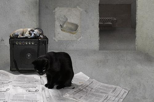 Pascale Turrek, die katze und der mops, Diverse Tiere, Tiere: Land, Surrealismus, Abstrakter Expressionismus