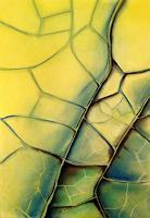 Nicole-Muehlethaler-Pflanzen-Palmen-Diverse-Pflanzen-Moderne-Abstrakte-Kunst