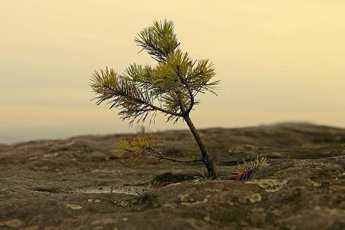 Ulf Göbel, Anspruchslos, Pflanzen: Bäume, Gegenwartskunst