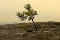 Ulf-Goebel-Pflanzen-Baeume-Gegenwartskunst--Gegenwartskunst-