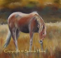 Sabina-Haas-Tiere-Land-Natur-Luft-Gegenwartskunst--Gegenwartskunst-