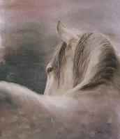 Sabina-Haas-Tiere-Land-Diverse-Tiere