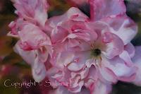 Sabina-Haas-Pflanzen-Blumen-Zeiten-Fruehling