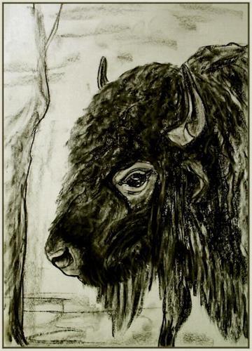 Amigold, Bison, Tiere: Land