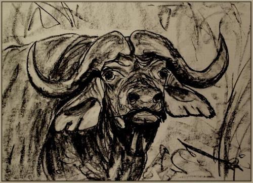 Amigold, Kaffernbüffel, Tiere: Land