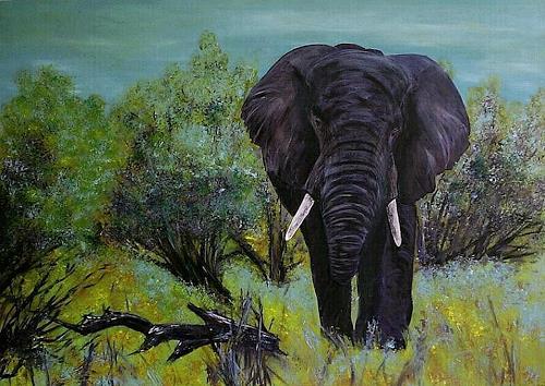 Amigold, Afrika, Landschaft: Ebene