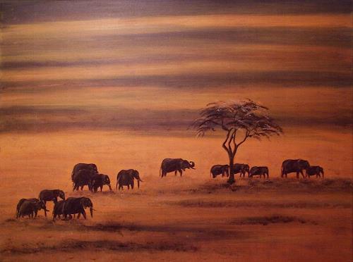 Amigold, Elefantenherde, Landschaft: Ebene, Tiere: Land