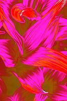 Miriam-Stone-Pflanzen-Blumen-Natur-Diverse-Gegenwartskunst-Gegenwartskunst