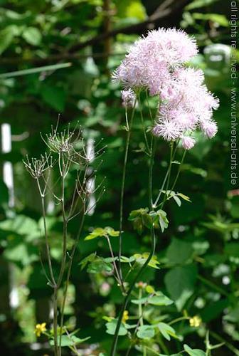 universal arts Jacqueline Ditt & Mario Strack, Two Generations, Pflanzen: Blumen, Stilleben, Naturalismus