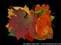 universal-arts-Jacqueline-Ditt---Mario-Strack-Natur-Diverse-Landschaft-Herbst