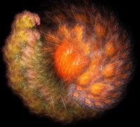 Falk-Wegner-Pflanzen-Blumen-Abstraktes-Gegenwartskunst--Gegenwartskunst-