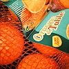 J. Bodin, Fruits XXI