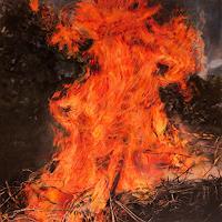 Jennifer-Walton-Natur-Feuer-Landschaft-Sommer-Neuzeit-Realismus
