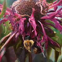 J. Walton, Bumblebee