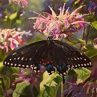 Jennifer-Walton-Pflanzen-Blumen-Tiere-Luft-Gegenwartskunst-Gegenwartskunst