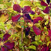Jennifer-Walton-Tiere-Luft-Pflanzen-Blumen-Gegenwartskunst-Gegenwartskunst
