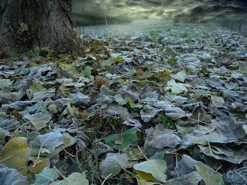 Lino Budano, Foglie, Natur: Erde, Landschaft: Winter, Expressionismus
