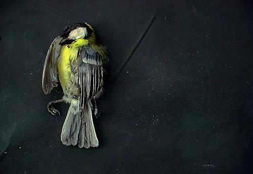 emilio merlina, Forgive me 09, Fantasie, Abstrakter Expressionismus