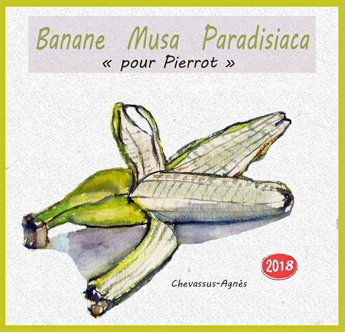 Jean-Pierre CHEVASSUS-AGNES, BANANE  MUSA  PARADISIACA, Pflanzen: Früchte, Pflanzen: Früchte, expressiver Realismus