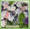 Jean-Pierre CHEVASSUS-AGNES, SPRING  FLOWERS