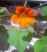 Evelin-Koenig-Pflanzen-Blumen