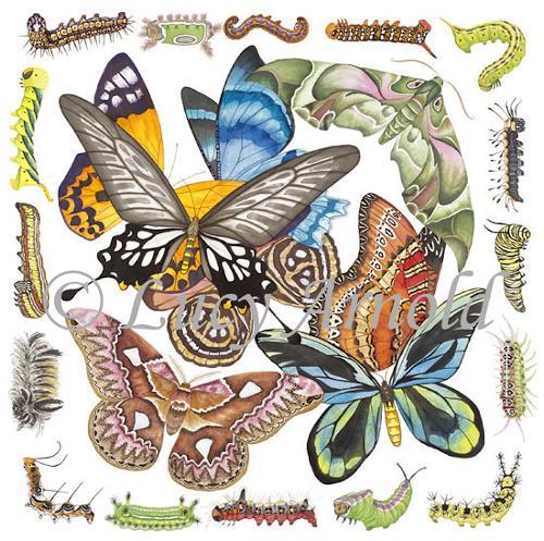 Lucy Arnold, Butterflies, Moths, Caterpillars, Tiere: Luft, Natur: Luft, Realismus