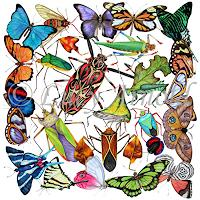 Lucy Arnold, Amazon Insects
