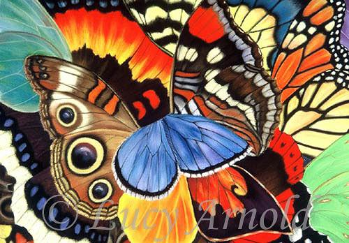 Lucy Arnold, Wings of California, Tiere: Luft, Natur: Luft, Realismus