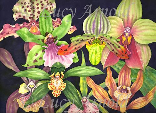 Lucy Arnold, Orchids, Pflanzen: Blumen, Natur: Erde, Realismus