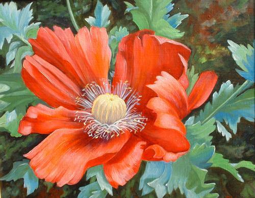 Kerstin Birk, Roter Mohn, Pflanzen: Blumen, Zeiten: Sommer, Realismus