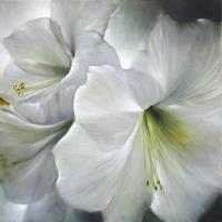 Annette-Schmucker-Pflanzen-Blumen-Gegenwartskunst-Gegenwartskunst