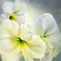 Annette-Schmucker-Pflanzen-Blumen-Landschaft-Gegenwartskunst-Gegenwartskunst